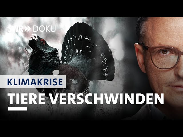 Tiere verschwinden - Arten sterben aus | Axel Wagner und die Klimakrise (1/5) | SWR Doku