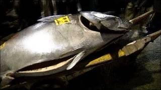 فيديو بيع سمكة تونة بـ 400 ألف دولار