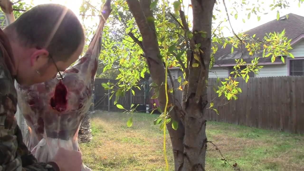 Hunting Tutorial Skinning And Quartering Deer And Other