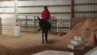 Mammoth Donkey Bridleless 3/20