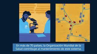 OMS: El sistema de vigilancia de la poliomielitis