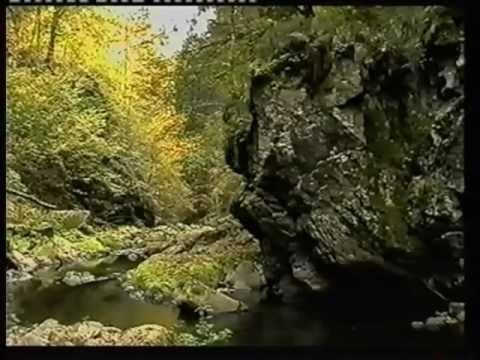 Beate Fischer Bayerischer Wald