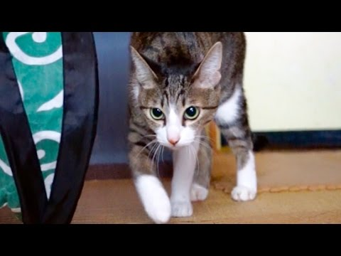 忍者ねこ – Ninja Cat Sneak Attack –