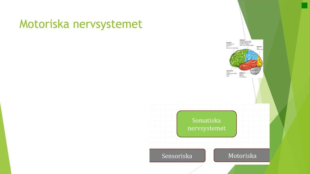Kap 5 Nervsystemet fysiologi
