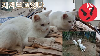 신라조경농원의 동물들♡ 고양이밥 훔쳐먹는  순둥이들과 …
