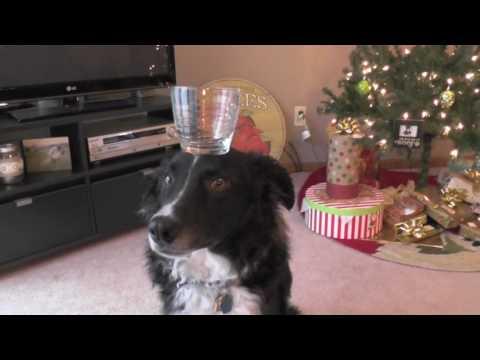 Finlee the Border Collie- Dog tricks