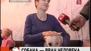 В Петербурге будут работать собаки-терапевты