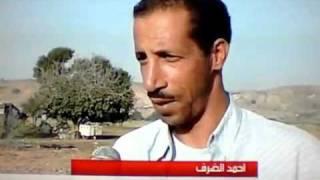 le sanglier domestiqué au Maroc