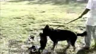Civil Protection Dog Training - International K9