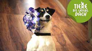 Best of Cookie | Tiere bis unters Dach | SWR Kindernetz