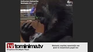 Θηλυκός γορίλας αγκαλιάζει και φιλά το νεογέννητο μωρό του bc4ea013275