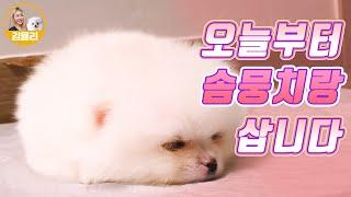 [Eng sub.] 오늘부터 솜뭉치와 삽니다 (feat. 아기 포메라니안 입양)