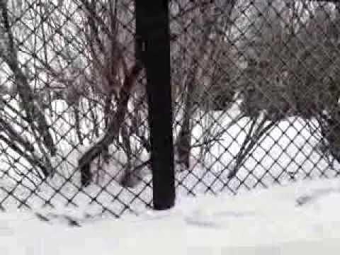 ЕЛЕЦ ул КОММУНАРОВ 02 02 2019