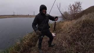 Не думал, что столько рыбы в этой реке. Gamakatsu LUXXE Yoihime Hana S69FL-solid