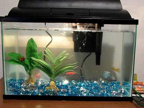 My New Fish Tank Youtube