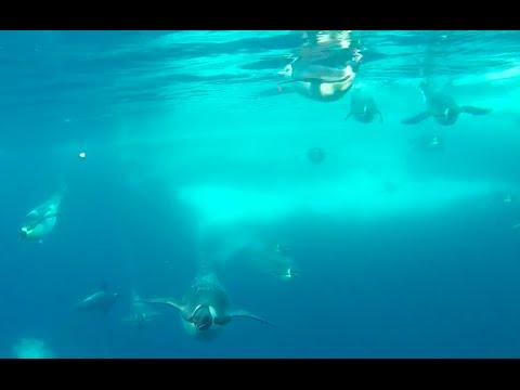 Penguins Under Ice In Antarctic 2015 Weddle Sea
