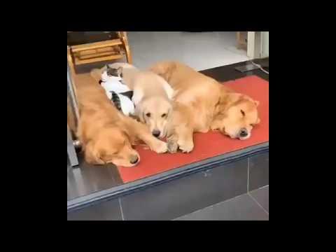 Воспитание! Владелица магазина в Китае попросила собак спрятаться, потому что клиенты боятся собак.