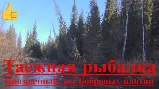 Рыбалка в тайге. Хариус, Осень, Сибирь, Выживание в тайге, Уаз, Нива, бобер