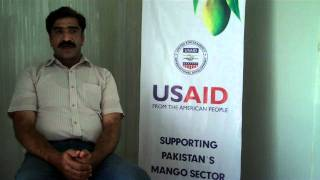 Interview with a Mango Farmer from Rahim Yar Khan (translation given below)