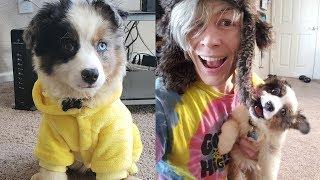 Download lagu Trying Dog hacks and DIY Pet Life Hacks! Simple Life Hacks & More by Blossom