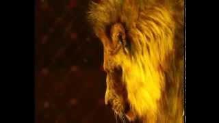 Лучшие цирковые номера: Цирк братьев Запашных -