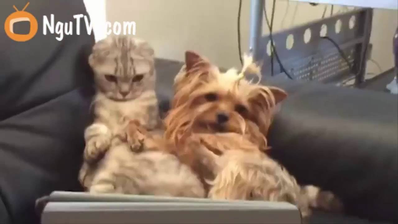 Start your day with a pet Very funny puppy funny cats videos at