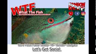 It's Time for our weekly WTFish Competition!  WIN A TSHIRT - image
