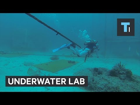 Check out the only permanent undersea research lab in the world