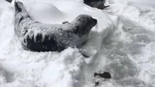 Снегопад в Орегонском зоопарке смотреть онлайн видео от Забавные животные в хорошем качестве 1280x72