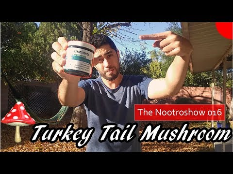 turkey-tail-mushroom-extract-review-|-the-nootroshow-016