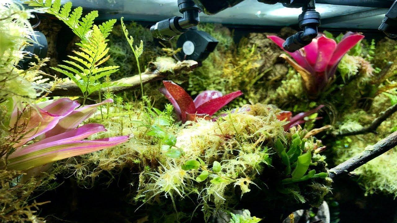 Ep 46 Beast Mode Part 1 Poison Dart Frog Terrarium Vivarium