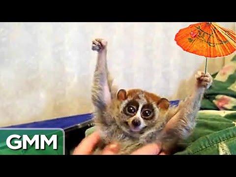 Slowest Animals On Earth