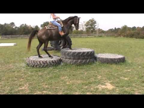 Dodge City Tack Obstacle Course Hillsboro Ohio