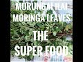 benefits of moringa leaves, drumstick leaves