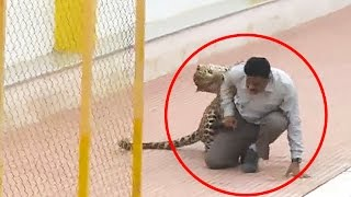 Leopard on the loose mauls six during prowl around Indian school