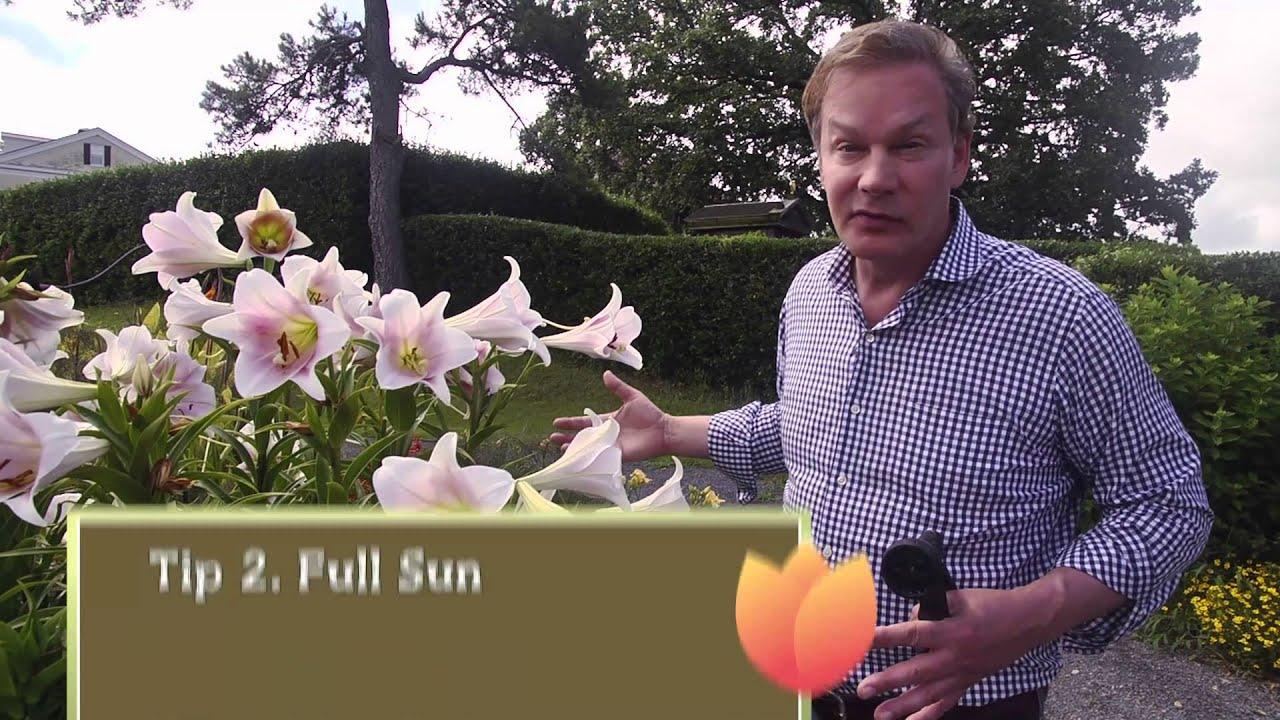 How to Grow Summer Flowering Bulbs YouTube