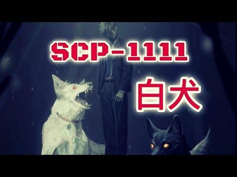SCP基金會 SCP-1111  The White Dog 白犬(中文)