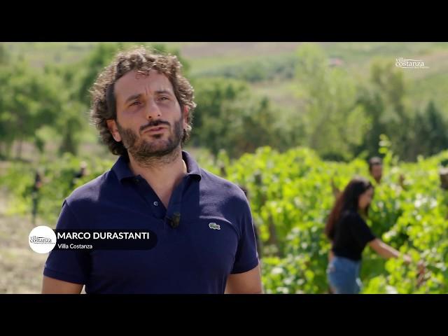 La vendemmia di Villa Costanza (2019)