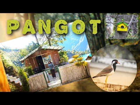 """Pangot""-पंगोट (Nainital) A place where birds feel safe #Birdwatching #cocoonresort #Pahadiswag"