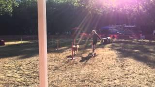 The Buddy Run Of Miss Daisy Dawg, The Beer Drinking Irish Terrier