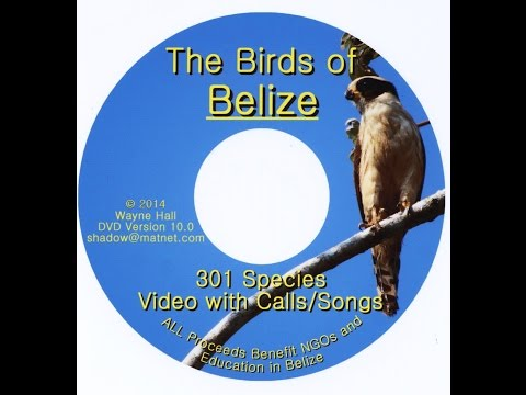 The Birds of Belize DVD Version 10 - Main Body - 301 Species