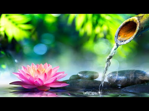 Relaxing Music 24/7, Meditation Music, Spa Music, Stress Relief Music, Sleep, Study, Massage Music