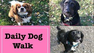 Daily Dog Walk