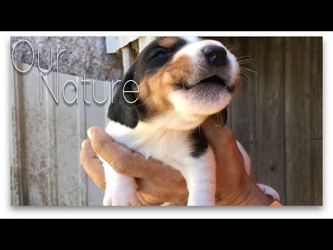 Puppies First Time Howling Compilation 2017