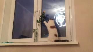 Экзотическая кошка и цветок