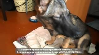 Непонятный кашель у нашей собаки_4