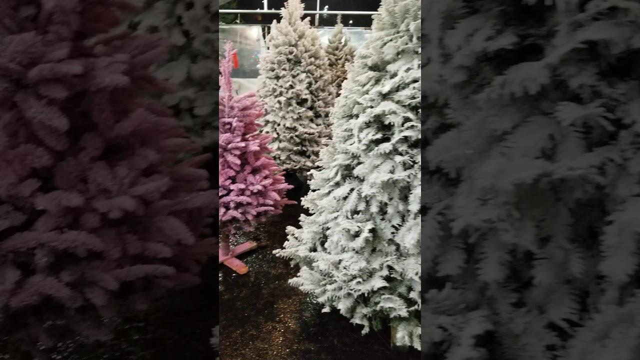 morning glory farms Christmas tree