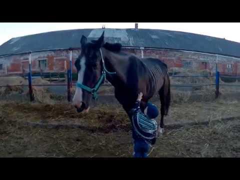 Вопрос: Правда, что лошади спят стоя, с чем это связано?