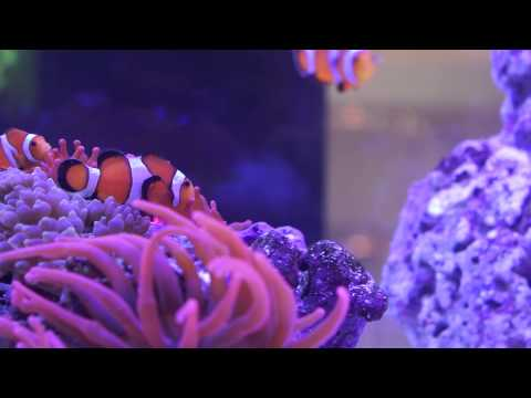 Clownfish Hardscape At InterZoo 2014