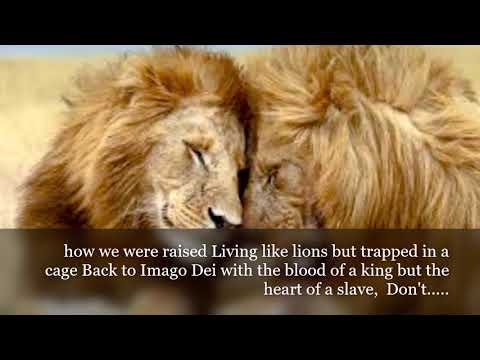 Run Wild - For King & Country Official lyrics video